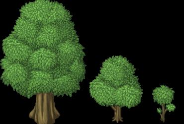 große Bäume