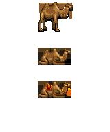 kamel.png
